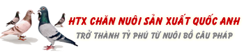 ★ Bồ Câu Việt Nam ★
